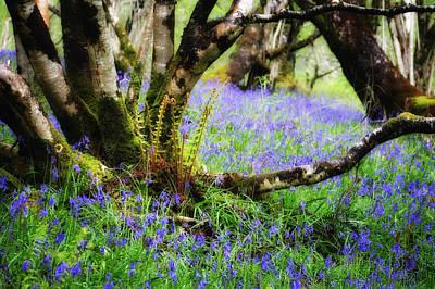 Adele Digital Art - Ferns And Bluebells Near Glen Coe Scotland by Adele Buttolph