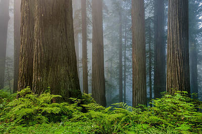 Photograph - Ferns And Grove by Greg Nyquist