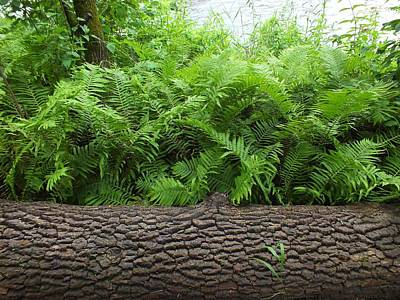 Photograph - Ferns And Log by Gene Cyr