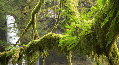 Ferns And Moss Growing On A Tree Limb Art Print by William Sutton