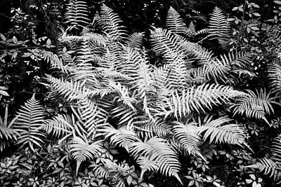 Photograph - Ferns Baton Rouge La Infrared Dsc04475 by Greg Kluempers