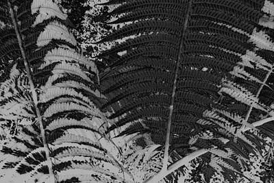 Ferns Art Print by Colleen Cannon