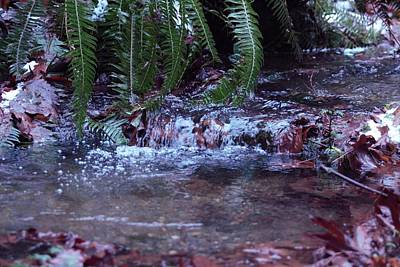 Photograph - Ferns Dancing by Donald Torgerson