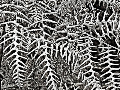 Photograph - Ferns by Ethna Gillespie