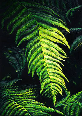 Drawing - Ferns In The Redwoods by Monique Morin Matson