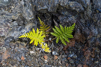 Ferns In Volcanic Rock Art Print