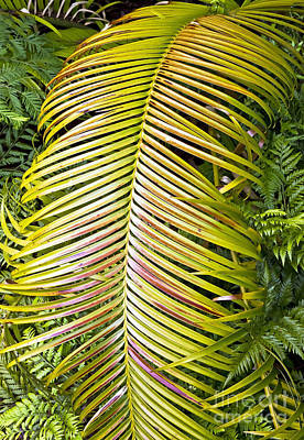 Art Print featuring the photograph Ferns by Kate Brown