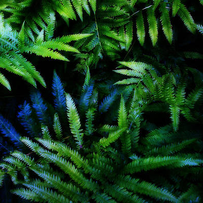 Ferns Art Print by Matt Lindley