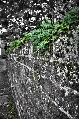 Ferns On Old Brick Wall Art Print