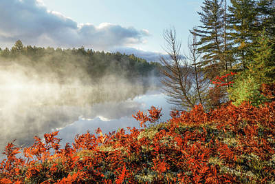 Northwoods Photograph - Ferns On Shoreline Of Tahquamenon River by Adam Jones