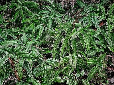 Photograph - Ferns by Robert Knight