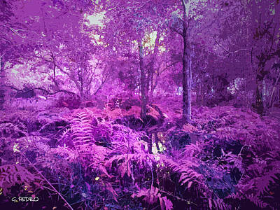 Photograph - Fernwood Fantasy Woodlands by George Pedro