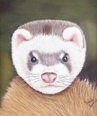 Ferret Art Print by Brenda Bonfield