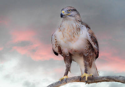 Photograph - Ferruginous Hawk At Dusk by Barbara Manis