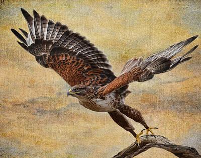 Ferruginous Hawk Art Print by Russell Dudzienski