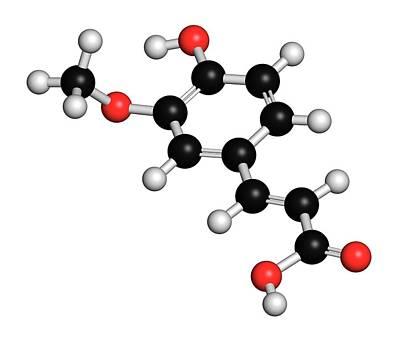 Fennel Photograph - Ferulic Acid Herbal Antioxidant Molecule by Molekuul