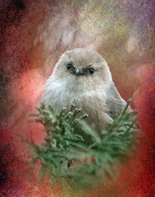 Tiny Bird Photograph - Festive Bushtit by Angie Vogel