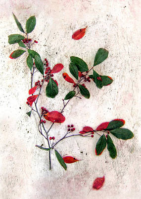 Photograph - Festive Red Berries by Louise Kumpf