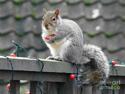 Christmas Squirrels Wall Art - Photograph - Festive Squirrel by James Lee