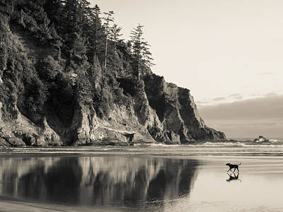 Photograph - Fetch On The Beach by Scott Rackers