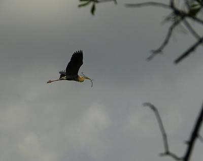 Photograph - Fetch The Stick by Judy Wanamaker
