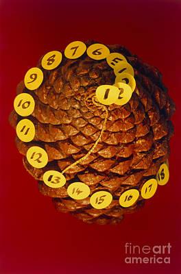 Fibonacci Numbers In A Pinecone Art Print