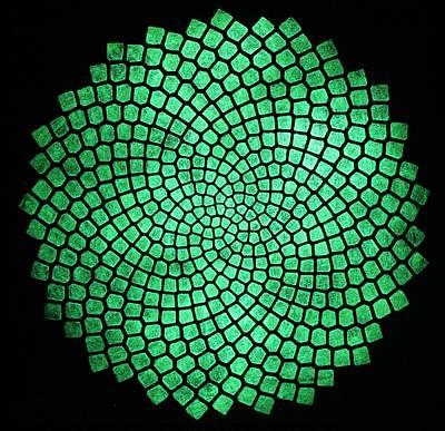 Glow In The Dark Painting - Fibonacci Sunflower by Twilight Vision