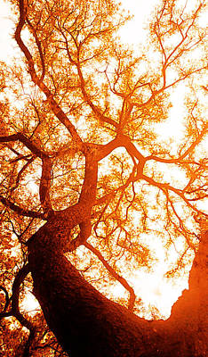 Fibonacci Tree Art Print by J- J- Espinoza