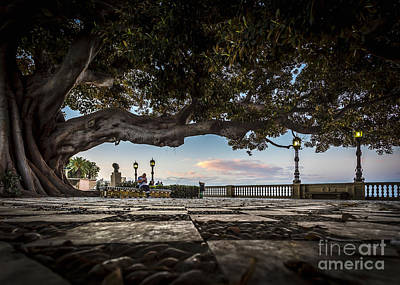 Ficus Magnonioide In The Alameda De Apodaca Cadiz Spain Art Print