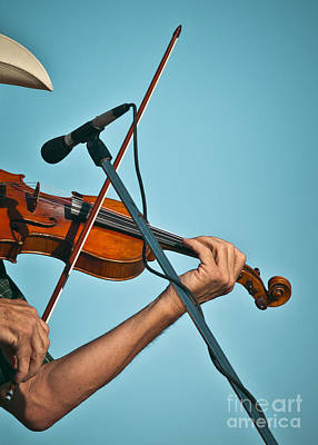 Photograph - Fiddler On Blue by Robert Frederick