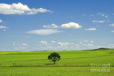 Field And Sky Print by Charline Xia
