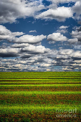 Photograph - Field And Sky by Michael Arend