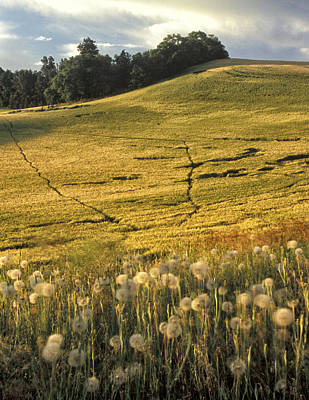 Contour Farming Photograph - Field And Weeds by Latah Trail Foundation