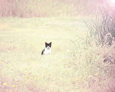 Field Cat Art Print by Kellie Prowse