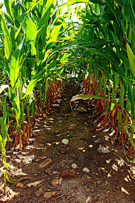 Photograph - Field Corn by Debbie Oppermann
