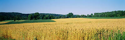 Field Crop, Maryland, Usa Print by Panoramic Images