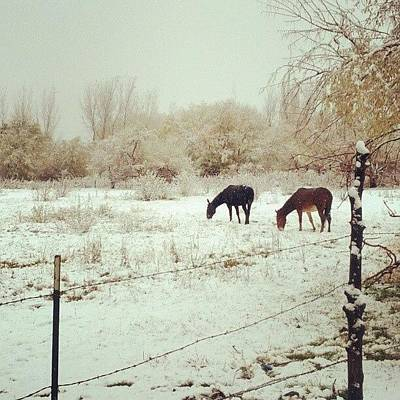 Horse Wall Art - Photograph - Field For Two by J O J O