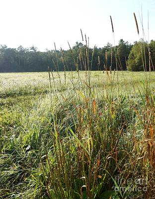Photograph - Field Grass by Kerri Mortenson
