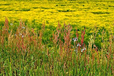 Photograph - Field In Spring by Beverly Hammond