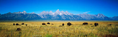 Clear Sky Photograph - Field Of Bison With Mountains by Panoramic Images