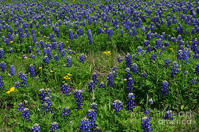 Colorful Photograph - Field Of Bluebonnets by Hilton Barlow