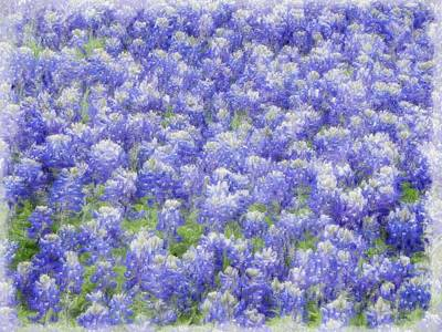 Photograph - Field Of Bluebonnets by Kathy Churchman