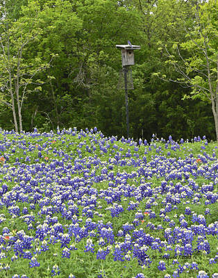 Photograph - Field Of Bluebonnets With Bluebird by Allen Sheffield
