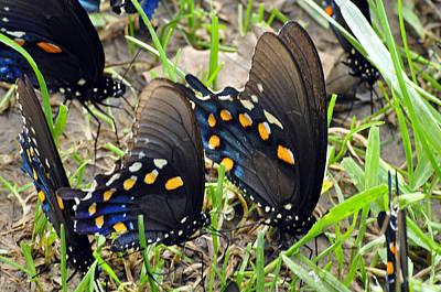 Photograph - Field Of Butterflies by Helen Haw