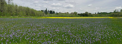 Field Of Camas And Western Buttercup Art Print by John Higby