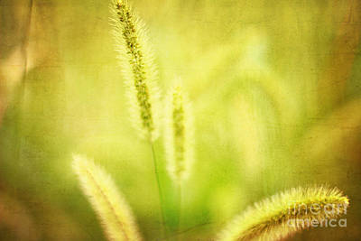 Photograph - Field Of Cat's Tail I by Beverly Claire Kaiya