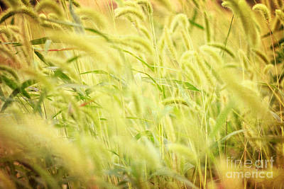 Photograph - Field Of Cat's Tail II by Beverly Claire Kaiya