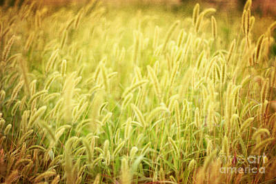 Photograph - Field Of Cat's Tail Iv by Beverly Claire Kaiya