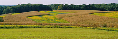 Field Of Corn Crops, Baltimore Print by Panoramic Images
