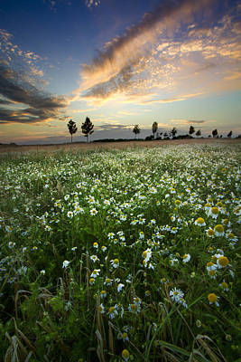 Wisconsin Wildflower Photograph - Field Of Daisies by Debra and Dave Vanderlaan